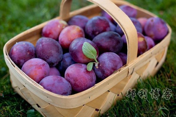 英国的水果-Plums(李子)