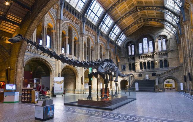 英国伦敦自然史博物馆