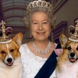 英国女王和她的狗狗们