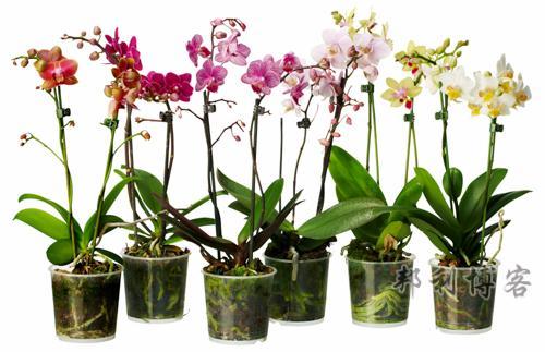 英国植物养殖