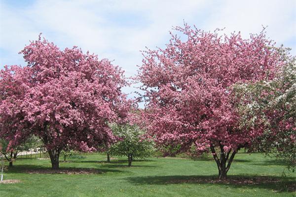赏樱花景点