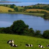 吴尊和女儿的爱尔兰纯净之旅:世界优质奶源圣地揭秘