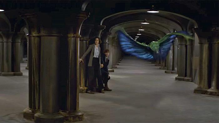 哈利波特衍生电影《神奇动物在哪里》