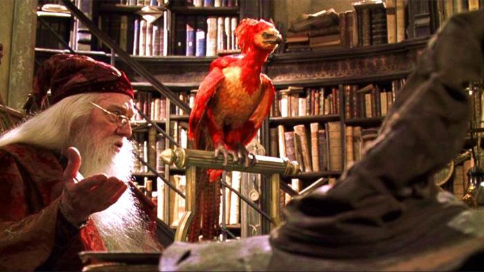 盘点哈利波特中的魔法动物
