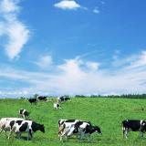 在爱尔兰从不买奶粉是一种怎样的体验?