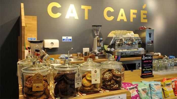 曼城特色咖啡厅推荐