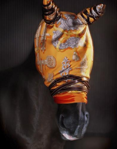 爱马仕丝巾