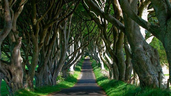 Antrim郡的树篱之路