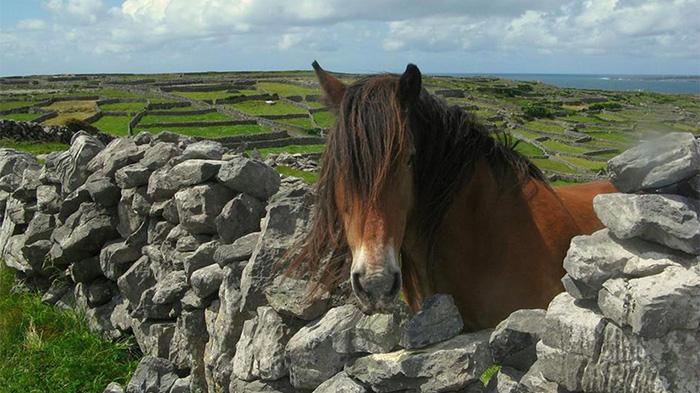 爱尔兰动物
