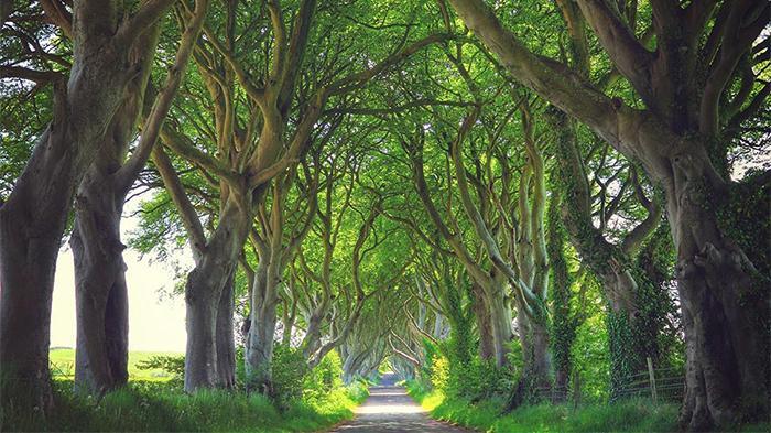 布雷加赫路(Bregagh Road)